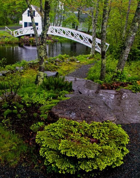 IMG_9029 - Somesville path 11 x 14